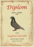 Urkunden / Diplome 2008